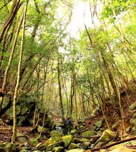 pre nature trekking