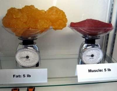 fatandmuscle