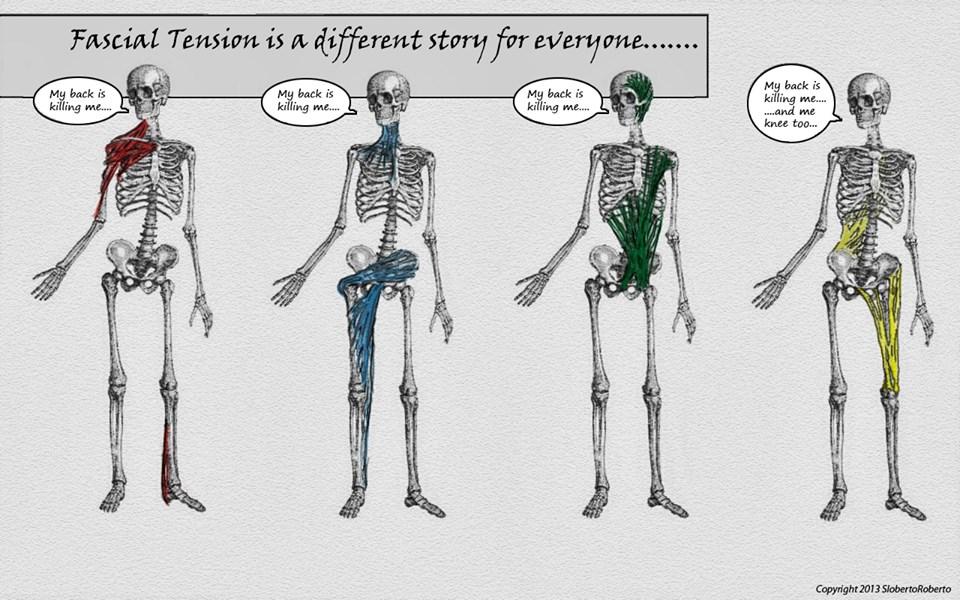 違った角度から筋膜のことを。