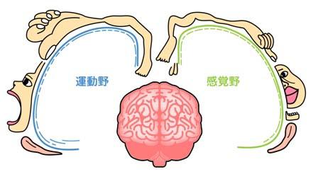 力を感じながら動くことは、からだへの感覚を高め、からだを動かす自由度が上がりもっと快適に暮らすことができる
