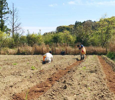 有機的なからだで有機的な作物を育て、有機的な暮らしをつくる